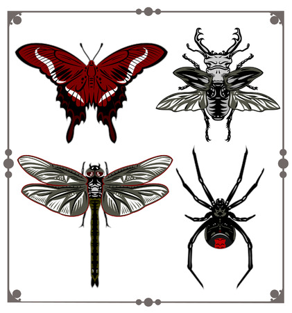 entomologist: A set of images of insects - beetle, dragonfly, butterfly, spider vector illustration