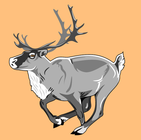 tundra: reindeer