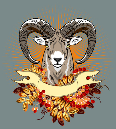 rams: rams head in the branches of mountain ash Illustration