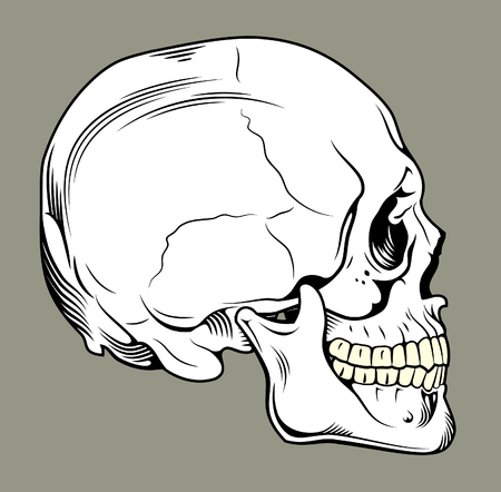 dissection: Human skull profile