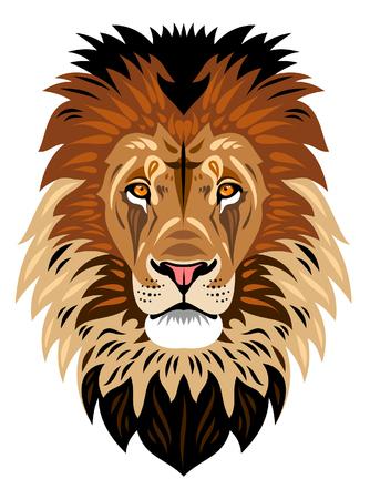 The muzzle of a lion