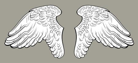 angel white: white angel wings Illustration