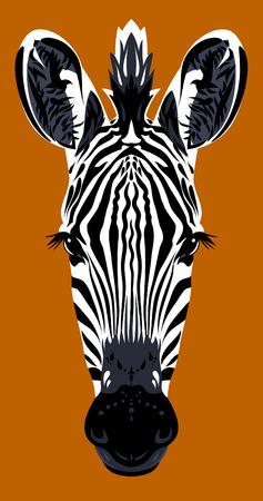 head close up: Portrait muzzle zebra