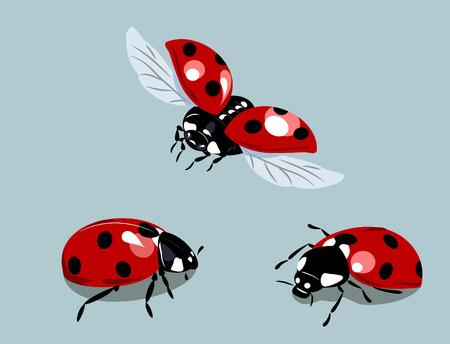 entomologist: set of images of ladybirds
