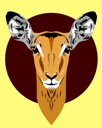 antelope: Portrait of a gazelle, antelope