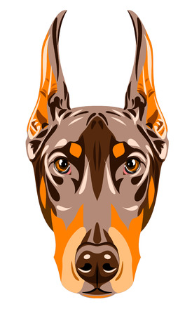 Portrait of a brown Doberman pinscher