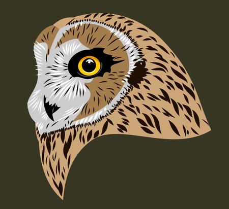 eagle owl: Portrait of an eagle owl