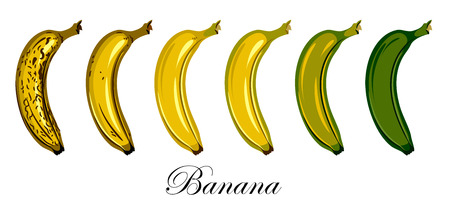 Stages of growth and ripening of banana fruit Illustration