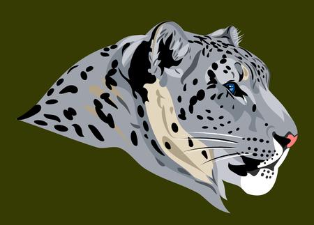 mountain lions: portrait of a snow leopard