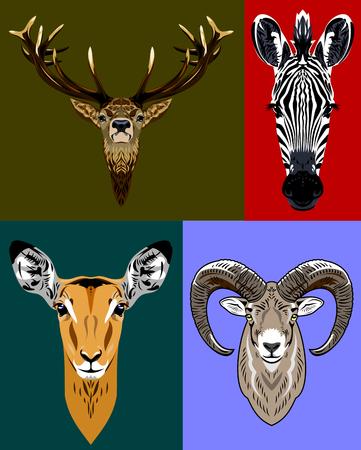 venison: Portraits herbivores - antelope, zebra, sheep, deer Illustration
