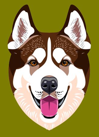 sledge dog: Portrait of a Husky dog ??breed Illustration