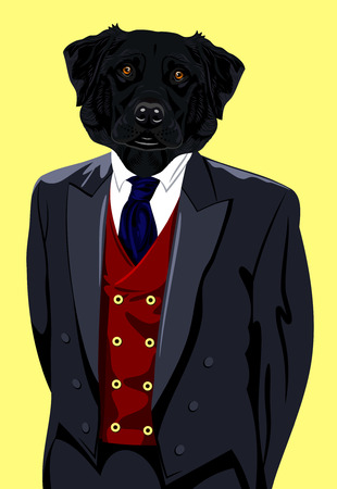 obedience: Portrait of a Labrador dog in the mens suit