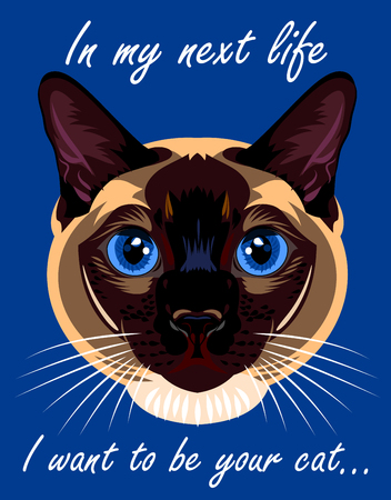 siamese: Portrait of a Siamese cat home