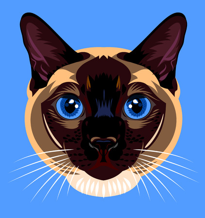 siamese cat: Portrait of a Siamese cat home