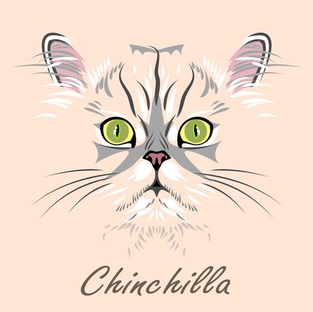 Portrait of Persian cat chinchilla Stock Vector - 59961021