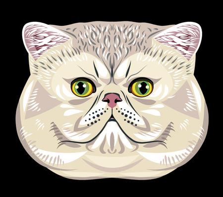 Portrait of Persian cat extremals