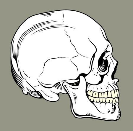 in profile: human skull in profile