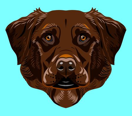 Portrait of a labrador dog breed
