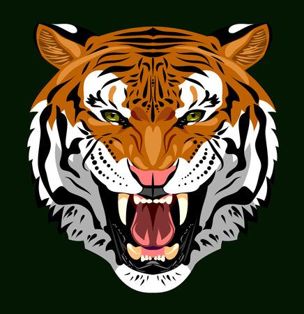 bared: Portrait of a tiger bared