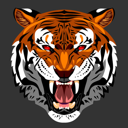 Bared in a terrible rage tiger