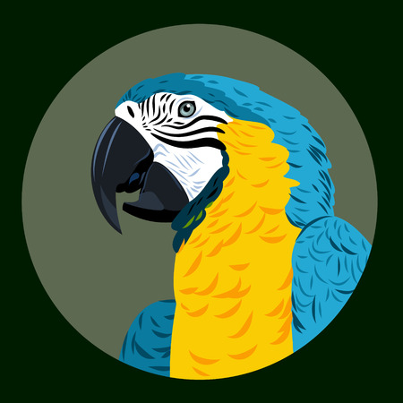 aviary: Portrait of Ara parrot