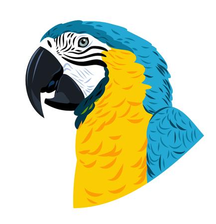 aviary: Portrait of Ara parrot
