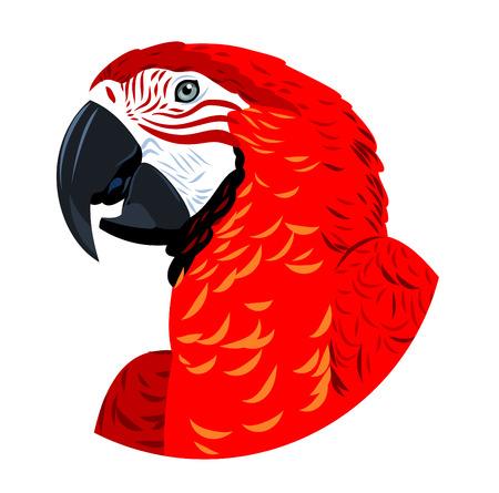 Portrait of Ara parrot