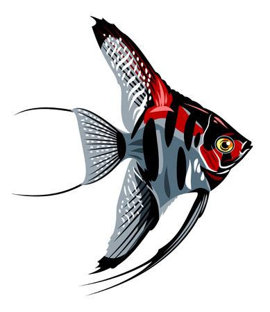 Beautiful and colorful aquarium fish angelfish Illustration