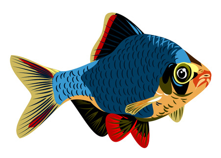 tetra fish: Aquarium fish barb vector illustration