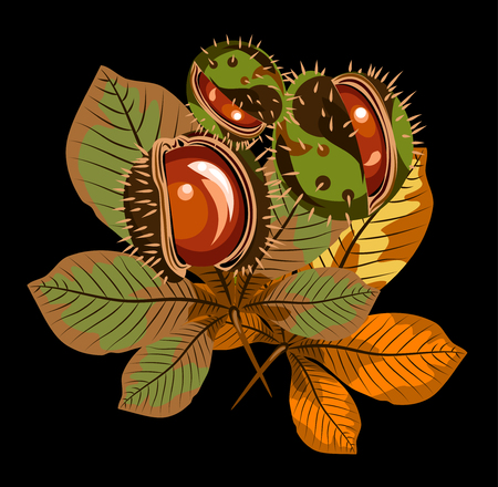 The leaves and fruit of the horse chestnut vector illustration