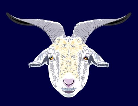 Portrait of a horned domestic goat vector illustration