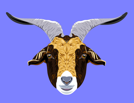yeanling: Portrait of a horned domestic goat vector illustration