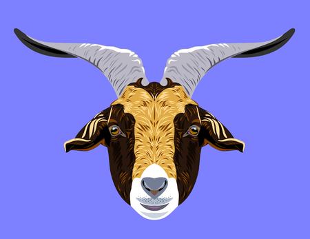 pet breeding: Portrait of a horned domestic goat vector illustration