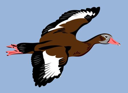 goose club: Wild duck fly