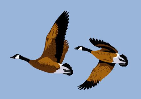 Wild ducks fly