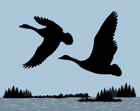 goose club: Wild ducks fly