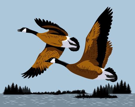 Les canards sauvages volent au-dessus de la rivière