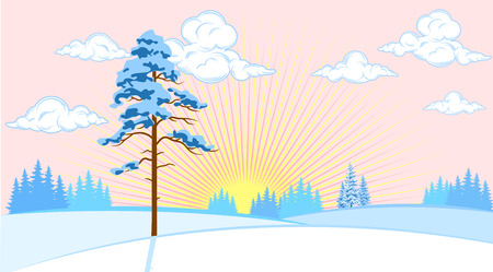 thickets: Winter landscape with fir trees on the plain background of the sun