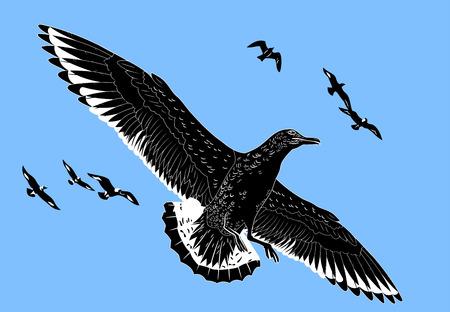 albatross: Petrel in the sky
