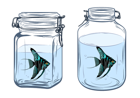 cichlid: Bottles, round and square shapes, with a angelfish inside, freehand drawing