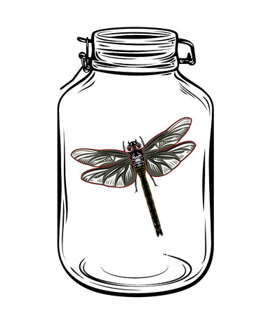 Dragonfly in a glass jar, freehand drawing