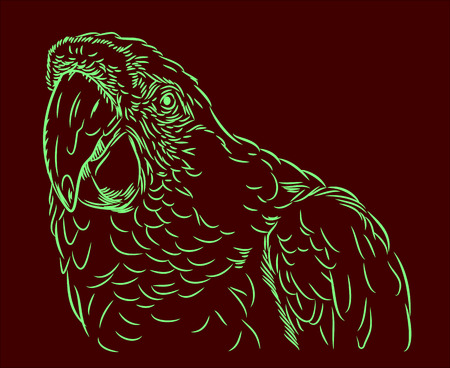 aviary: Portrait of Ara parrot prints in the style of (doodle)