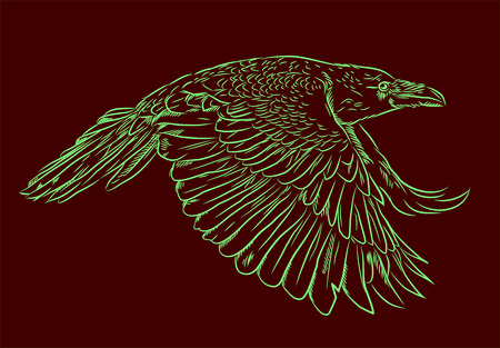engravings: Portrait of a raven flying in the style of engravings (doodle)