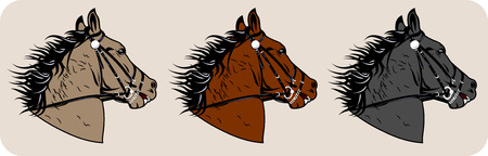 Set of images of the muzzle racehorse Illustration