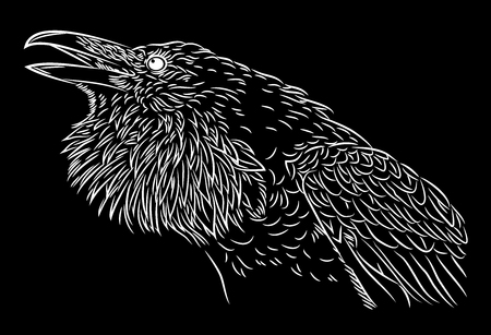 magpie: Portrait of a raven in the style of engravings (doodle)
