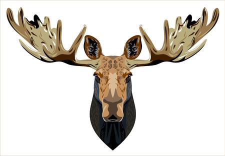 hoofed: Portrait of a horned elk