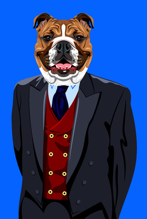 Portrait of English bulldog in the mens business suit