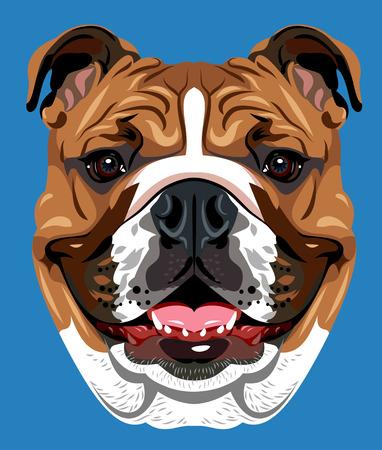 Portrait der englischen Bulldogge