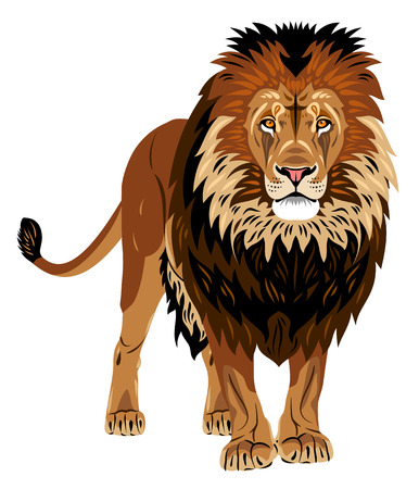 Portrait of African lion Stok Fotoğraf - 69775202