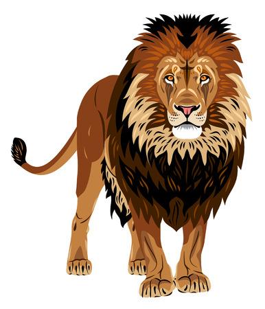 Portrait of African lion Illustration